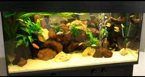 Akvárium Malawi 400 litrů