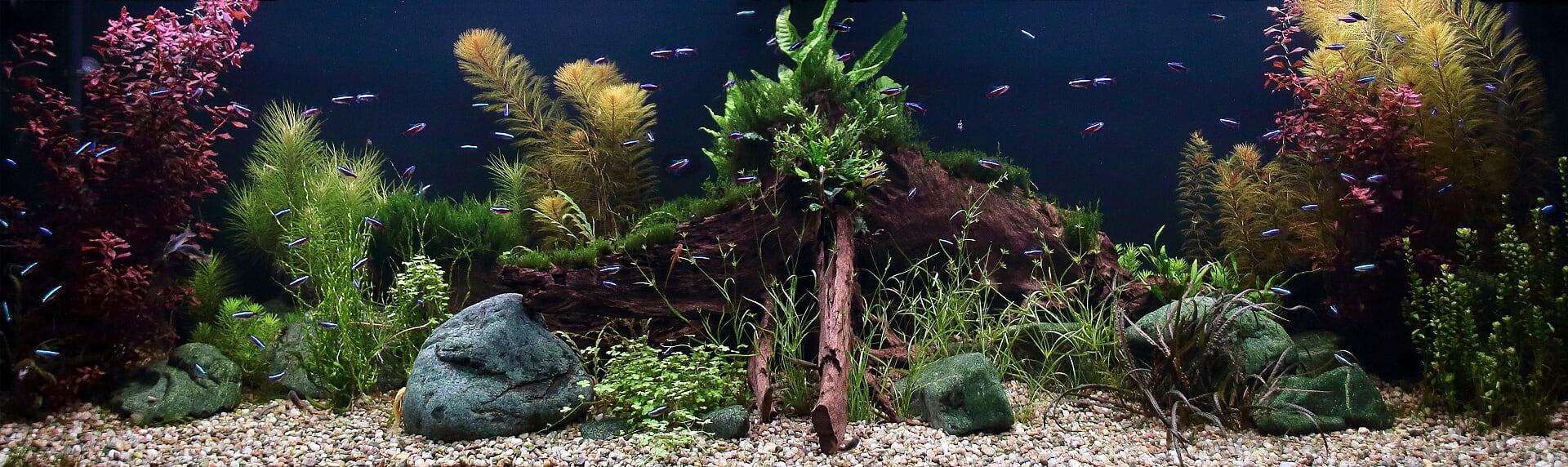 Akvárium na míru 600 litrů