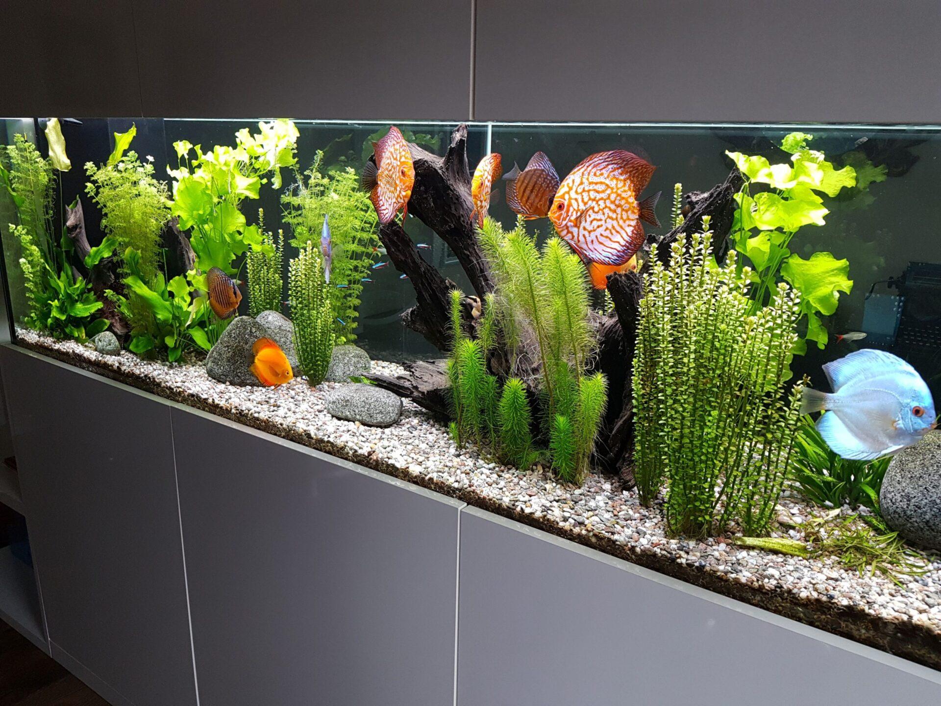 Akvárium na míru 700 litrů - terčovci