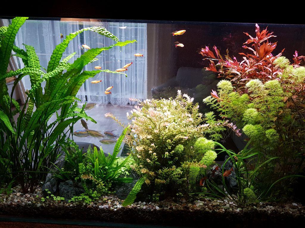 Akvárium na míru 100 litrů