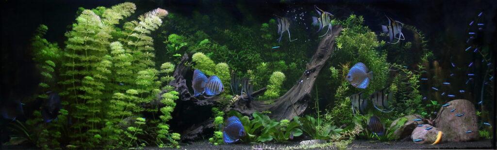 Akvárium 600 litrů terčovci