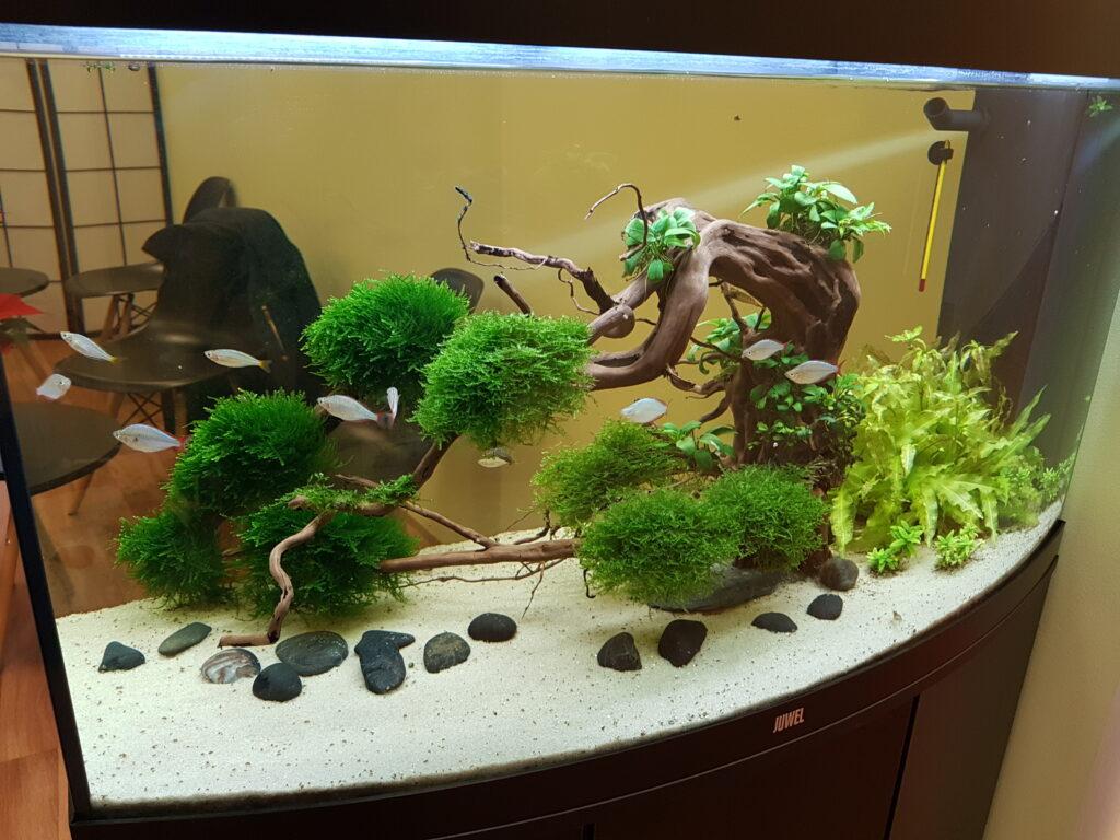 Akvárium Juwel Vision 180 – Feng shui